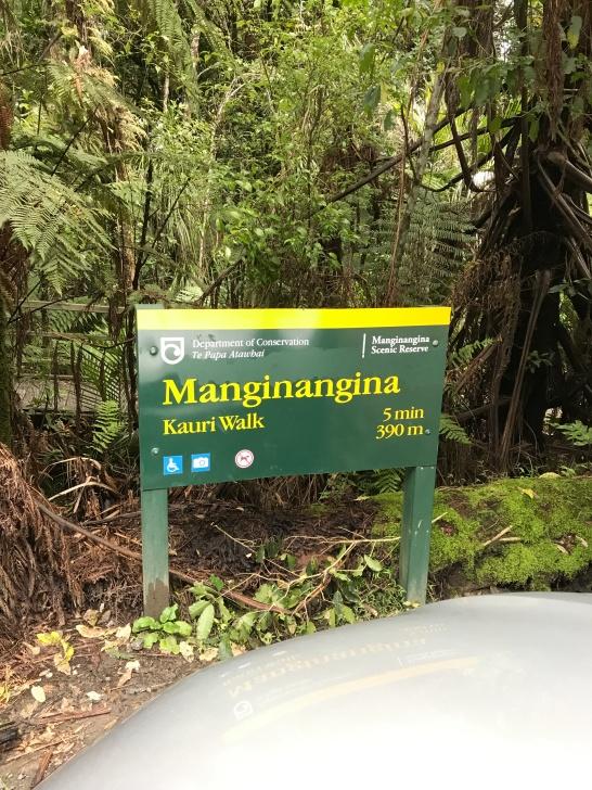 Kauri forest