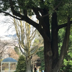 Gazebo and large tree in Queenstown