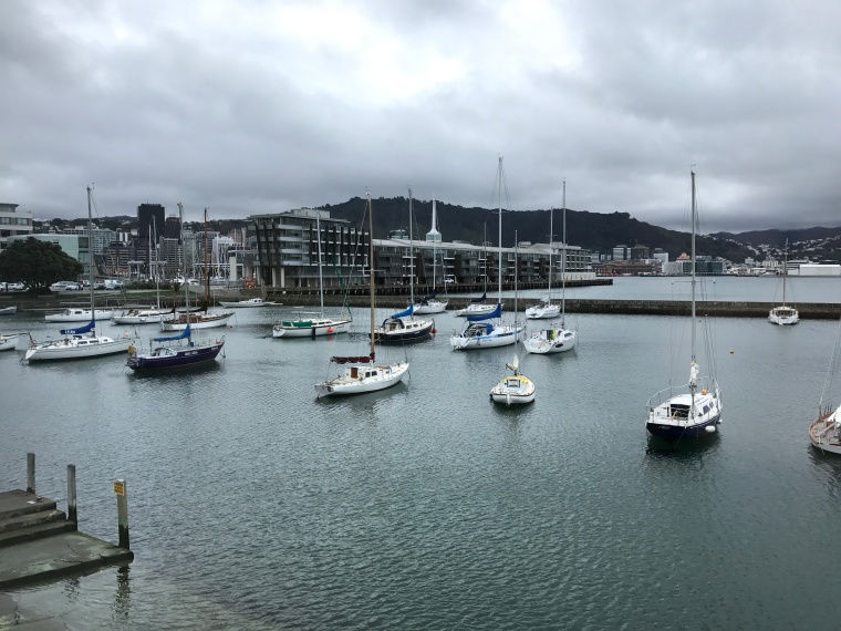 sail boats in Wellington